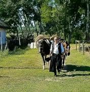 Magyar Cowboy